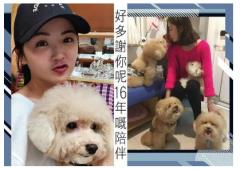 短短5天时间蔡卓妍痛失两条爱犬